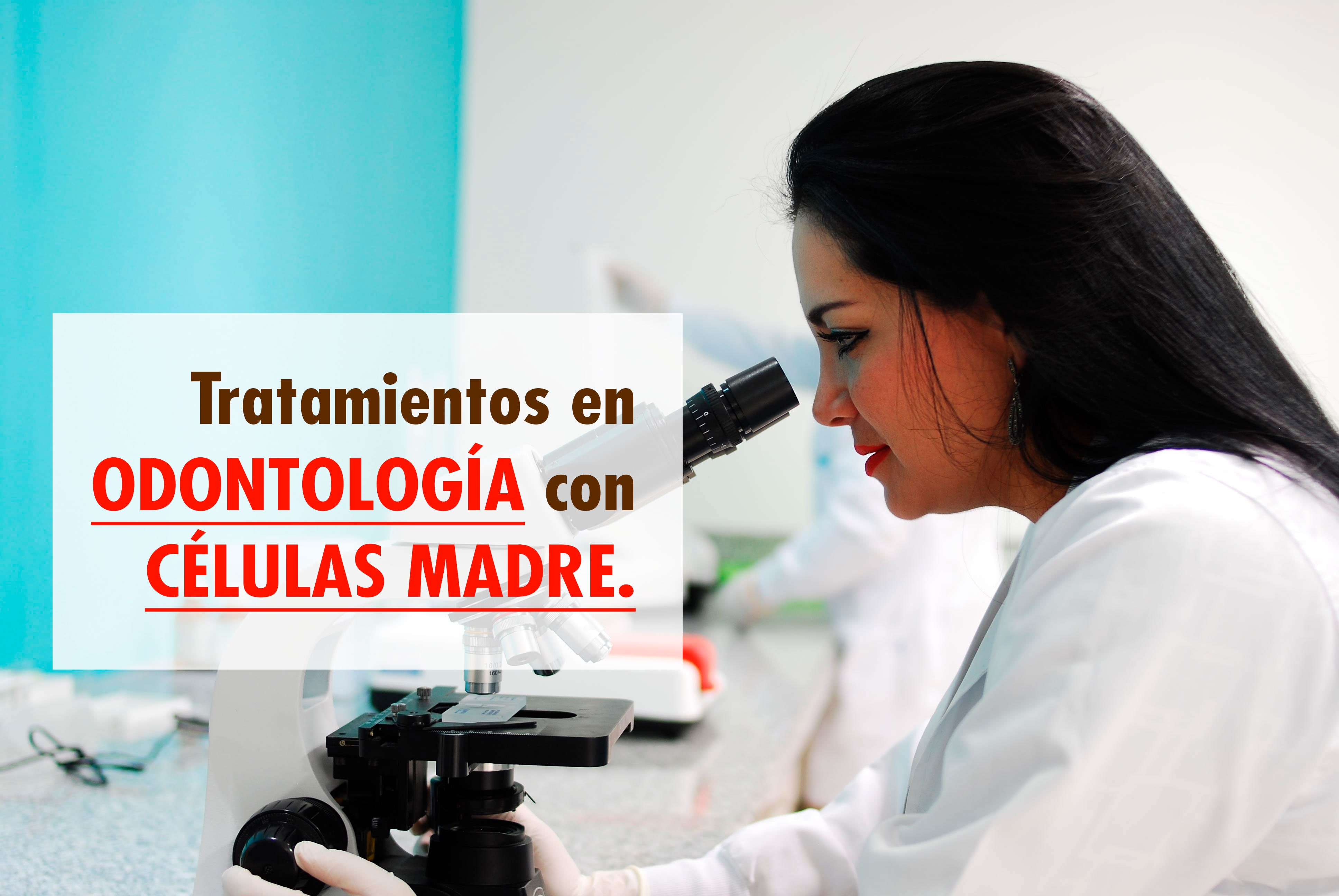 celulas-madre-en-odontologia